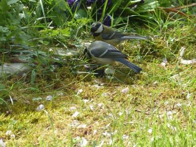 Klassische Reihenhausgärten Naturbeobachtungen